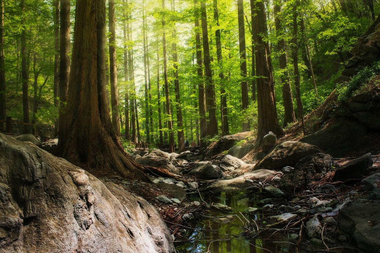 Southeast Asia magical jungle forest rainforest nature national park travel destination